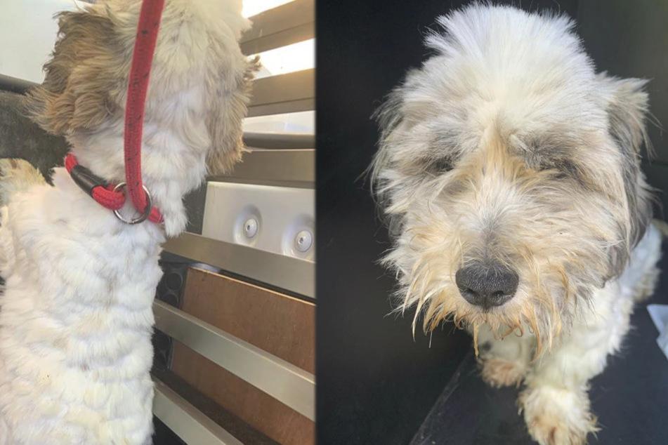 Verstoßener Hund schockt seine Retter, als sie begreifen, was mit ihm los ist