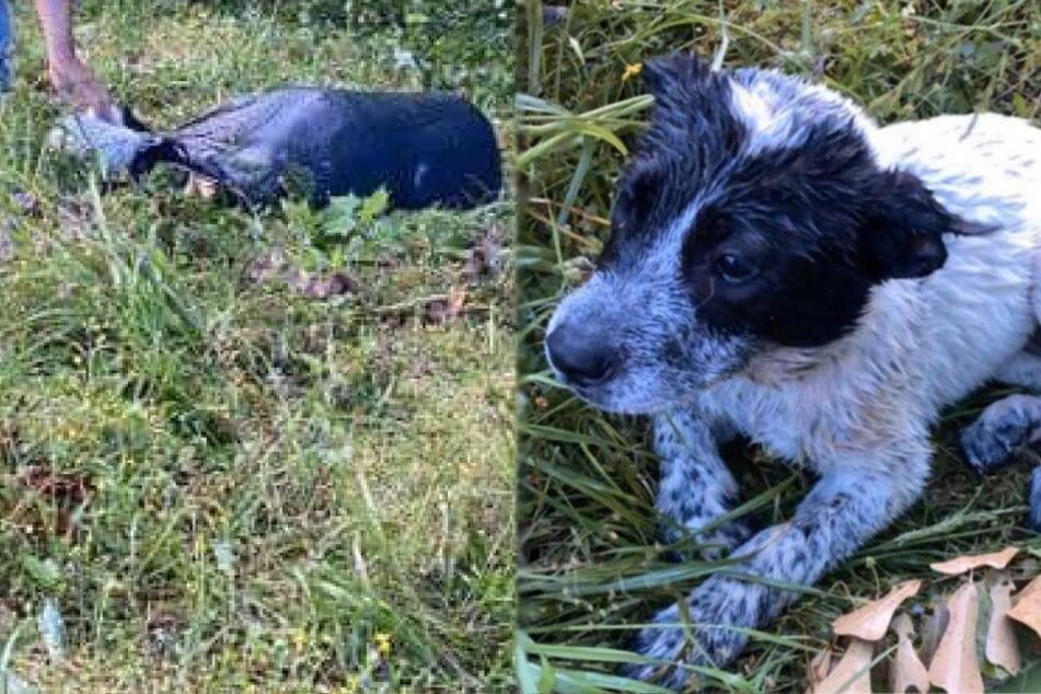 Verstoßener Hund begreift nicht, dass seine Mutter tot ist