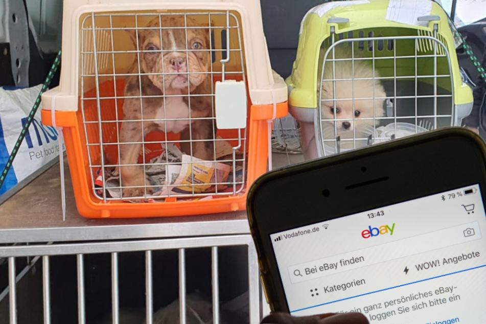 Hunde online kaufen? Tierschützer diskutieren Verbot