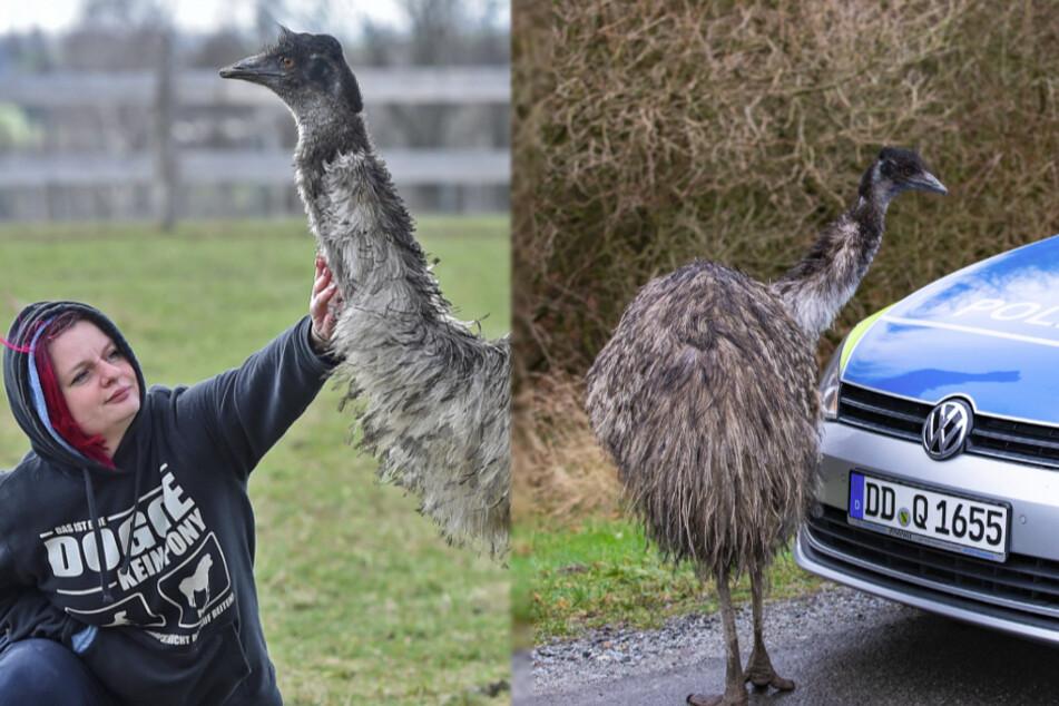 Dresden: Autobahn-Emu Elmo: So geht es ihm heute