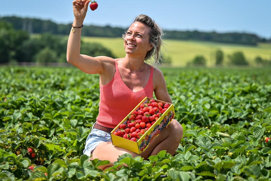 Landwirtin Bianca Scholz (36) freut sich über die knallroten Erdbeeren auf ihrem Feld.