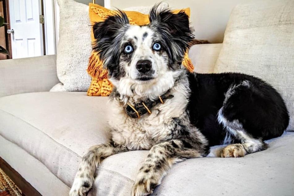 Der markante Hund hört auf den Namen Jackson und war über vier Monate verschwunden.