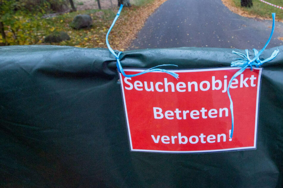 """Ein Warnschild mit der Aufschrift """"Seuchenobjekt Betreten verboten!"""" hängt nach einem Vogelgrippe-Ausbruch an einem Geflügel-Gut. In Lärz an der Mecklenburgischen Seenplatte ist ein weiterer Fall von Vogelgrippe in einem Legehennen-Betrieb aufgetreten. (Symbolfoto)"""