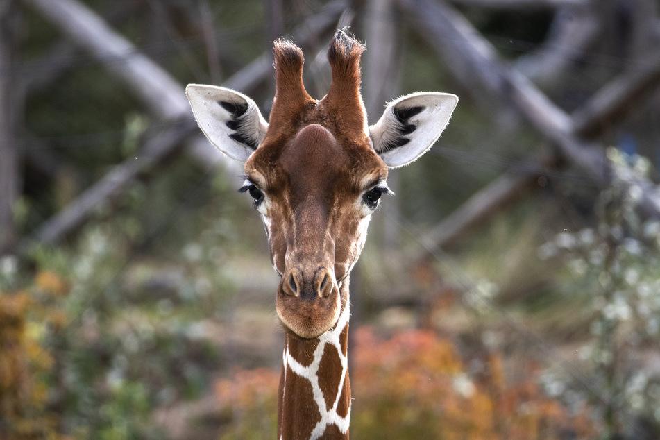 Zoo News