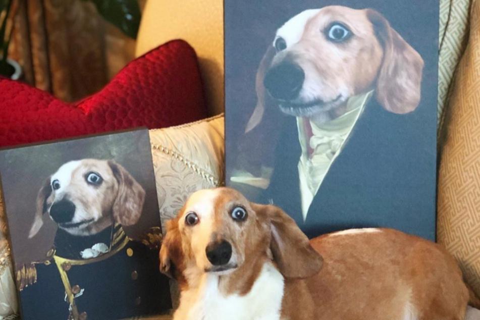 Wer selbst ein adeliges Haustierportrait anfertigen lassen möchte, dem stehen zahlreiche Motivvorlagen zur Verfügung.