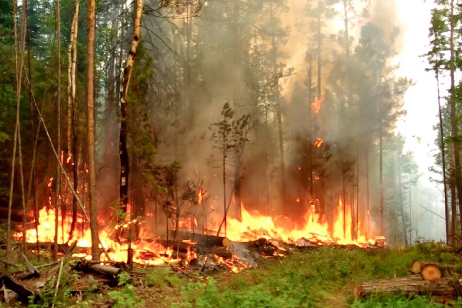 Das Videostandbild zeigt einen Waldbrand in der Republik Sacha (bestmögliche Qualität). Begleitet von ungewöhnlich hohen Temperaturen breiten sich die Waldbrände weiter aus.
