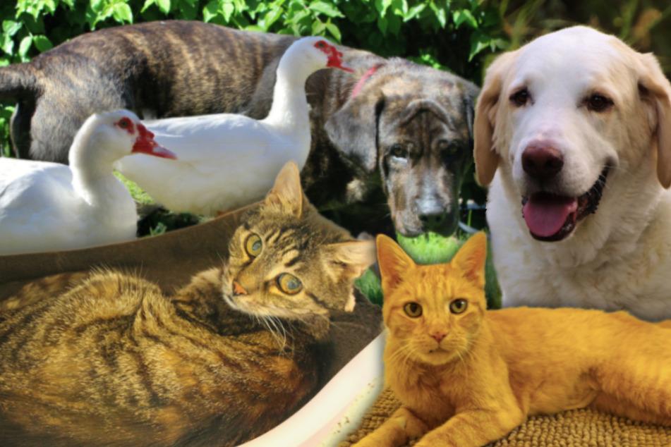 7 besondere Tiere: Diese Hunde, Katzen und Enten suchen ein Zuhause