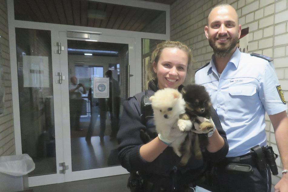 Polizei rettet verkümmerte Hundewelpen aus Kofferraum auf der Autobahn