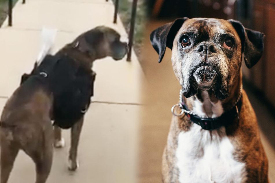 Dieser Hund wird in der Corona-Krise zum Wein-Lieferanten