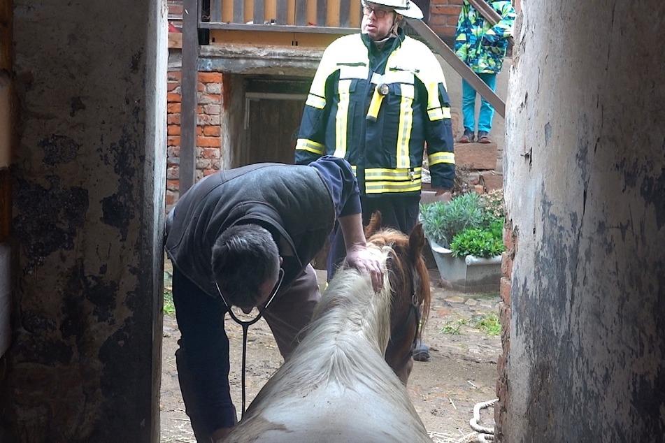Ein Tierarzt überprüft den Zustand des Ticker-Ponys.