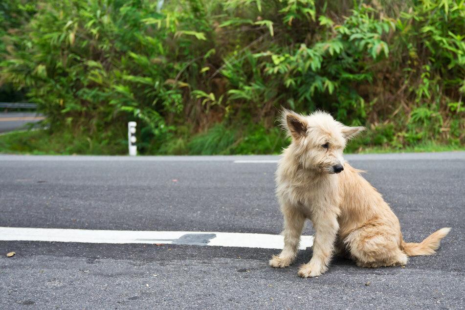Hund auf Bundesstraße löst Massencrash aus