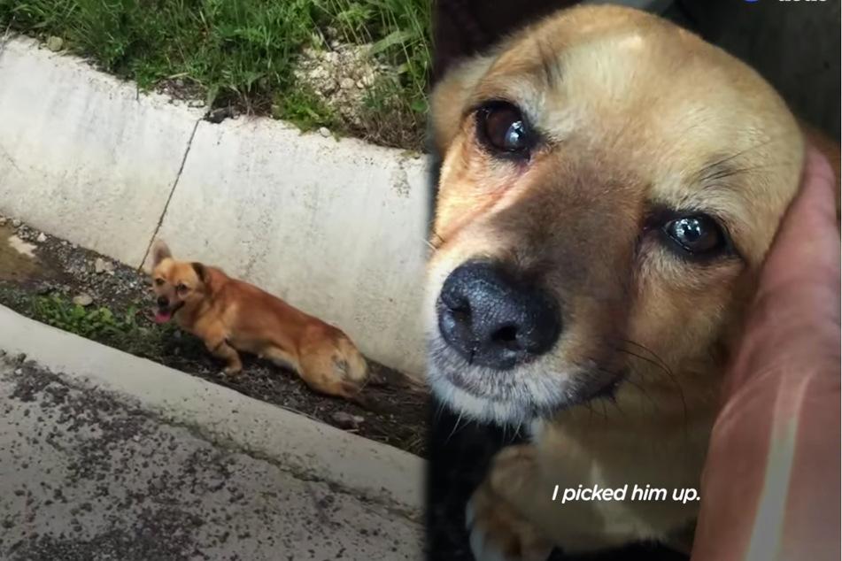 Solca fand und rettete Tycho aus einem Straßengraben und päppelte ihn wieder auf.