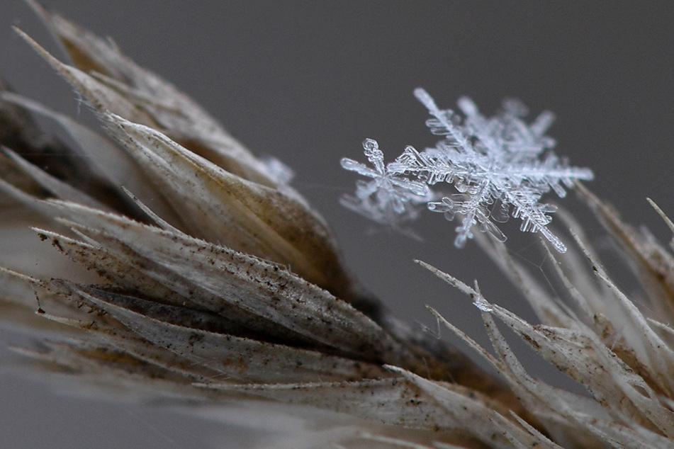 Temperatursturz in Bayern: Experten erwarten den ersten Schnee am Wochenende