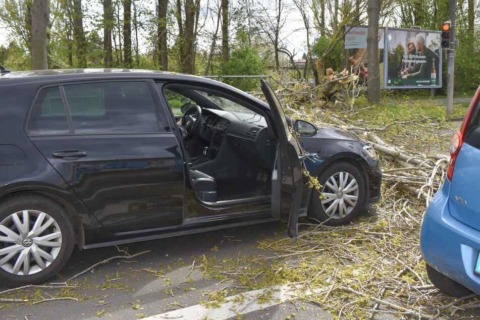 Verletzt wurde durch den herabfallenden Baum glücklicherweise niemand.