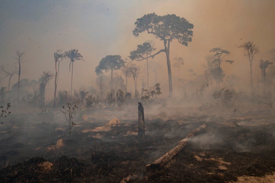 Brazil suffers the worst drought in almost 50 years amid Amazon fires
