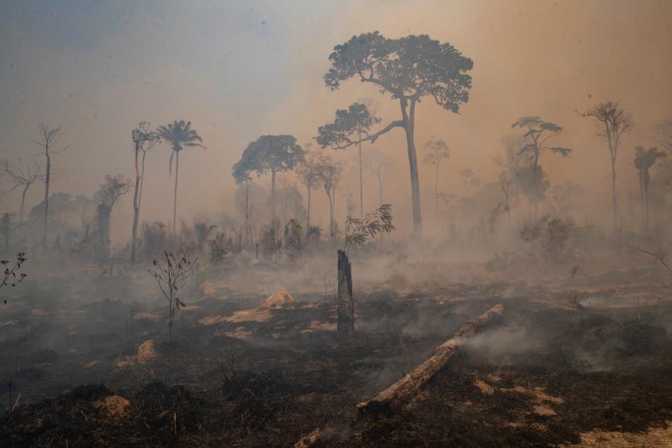 Amazonas-Feuer: Brasilien leidet unter der schlimmsten Dürre seit fast 50 Jahren