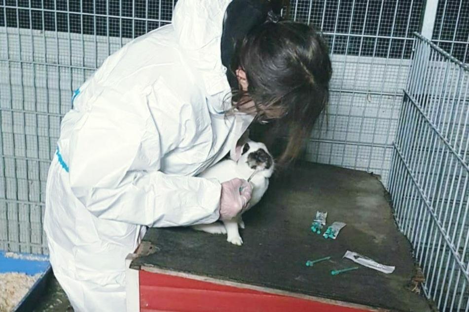 Sowohl Tierärzte als auch Pfleger dürfen sich den Tieren nur in Schutzmontur nähern.