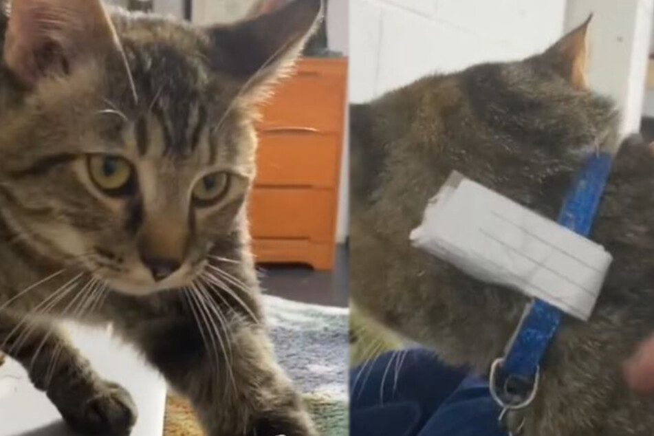Cat comes home with a note and it's the beginning of a beautiful friendship