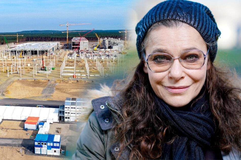 Umweltschützer fordern Baustopp von Tesla-Fabrik bei Berlin!