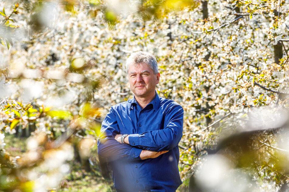 Udo Jentzsch vom Landesverband Sächsisches Obst bangt um die Kirschen-Ernte.