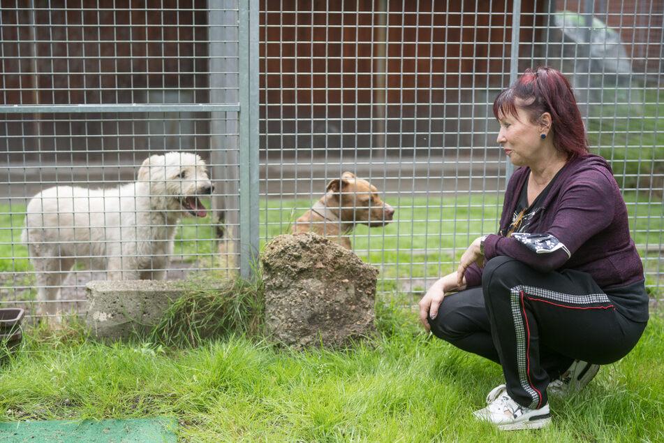 Regina Barthel-Marr vom Tierheim Freital mit Schafpudel Dusty (7, l.) und Stafford-Mischling Stella (4).