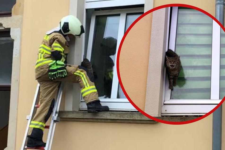 Lebensgefährliche Situation: Feuerwehr muss eingeklemmte Katze retten