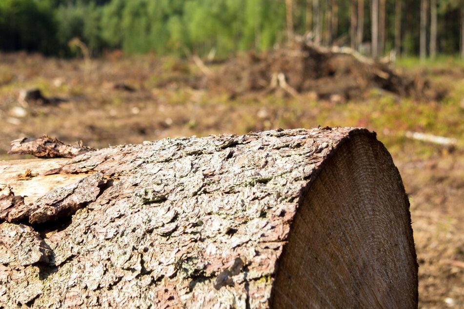 Bei dem Unglück war der junge Mann unter den unteren Teil des Baumstamms geraten. Aufgrund der schweren Verletzungen starb er. (Symbolbild)