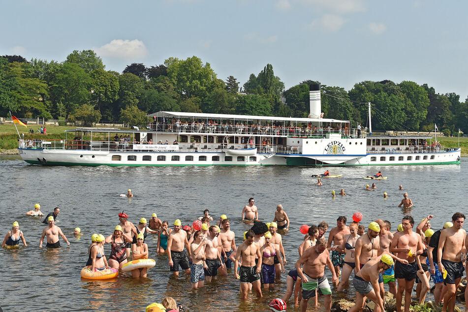 Im Ziel: Am Fährgarten steigen die Schwimmer nach 3,5 Kilometern an Land.