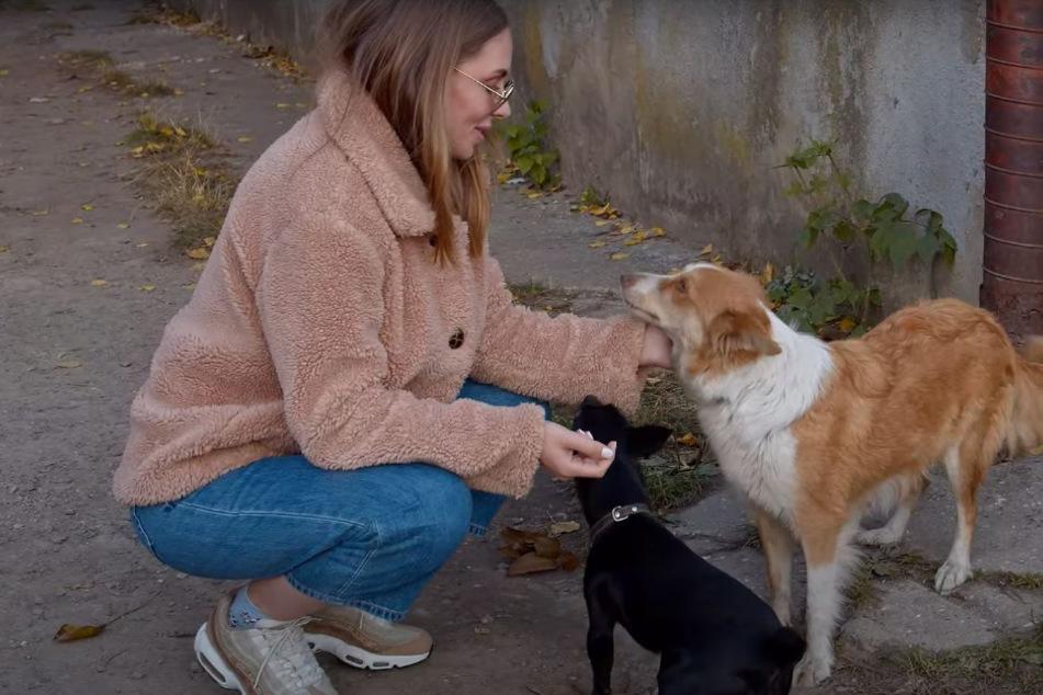 Tierschützer werden wegen Hunden zur Hilfe gerufen: Vor Ort erfahren sie die bittere Wahrheit