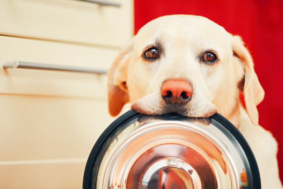 Für den knurrenden Hundemagen selber Futter machen? Das ist gar nicht so schwer!