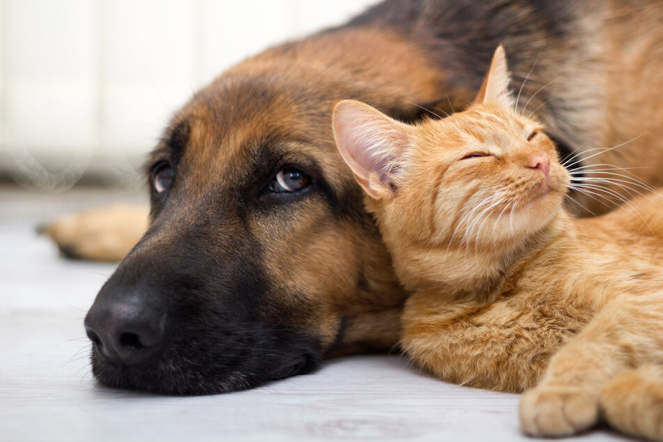 Haustiere können das gefährliche Virus nach derzeitigem Kenntnisstand nicht übertragen.