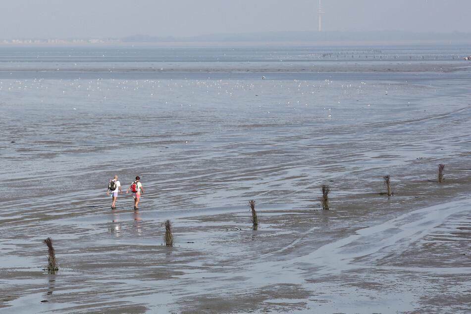 WWF veröffentlicht App zur Erkundung der Wattenmeer-Region