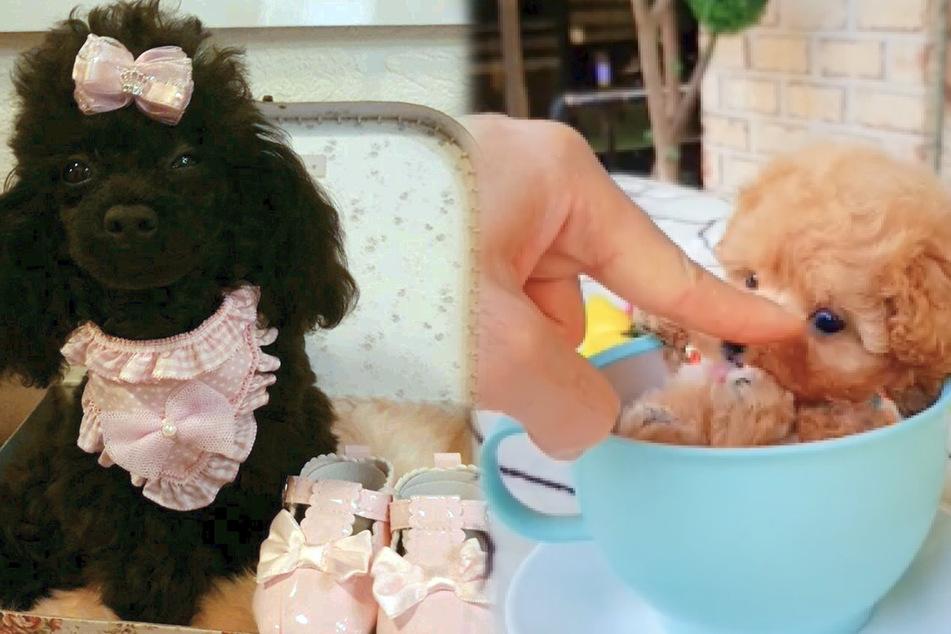 Hündchen in Teetassen: Niedlicher Trend oder schlimme Tierquälerei?
