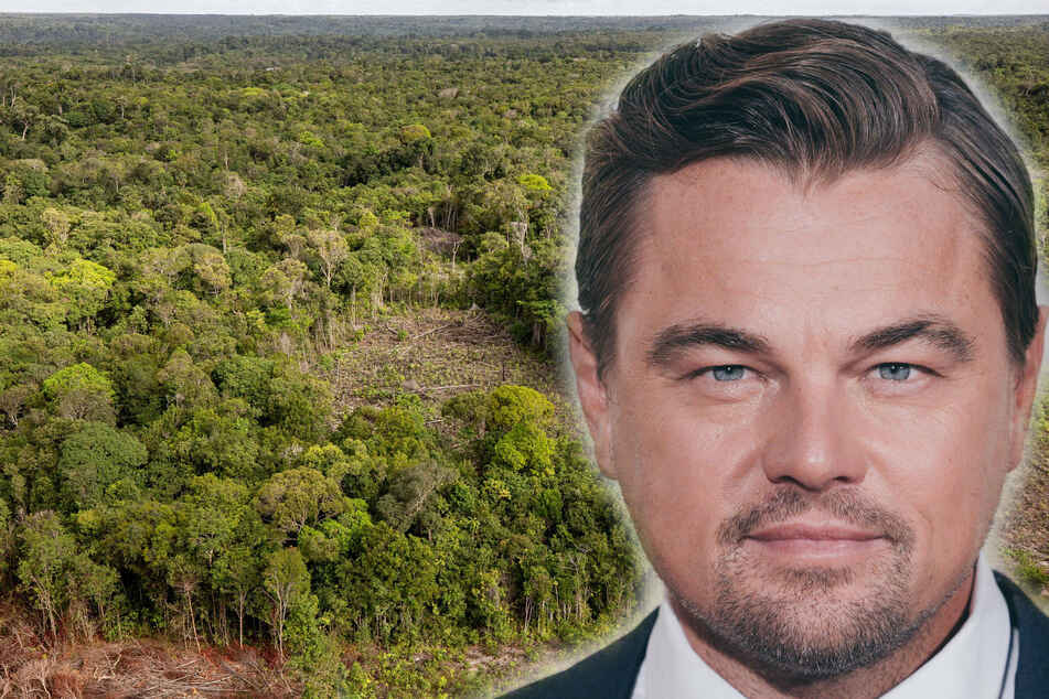 Leonardo DiCaprio and Katy Perry urge Biden to protect Amazon Rainforest