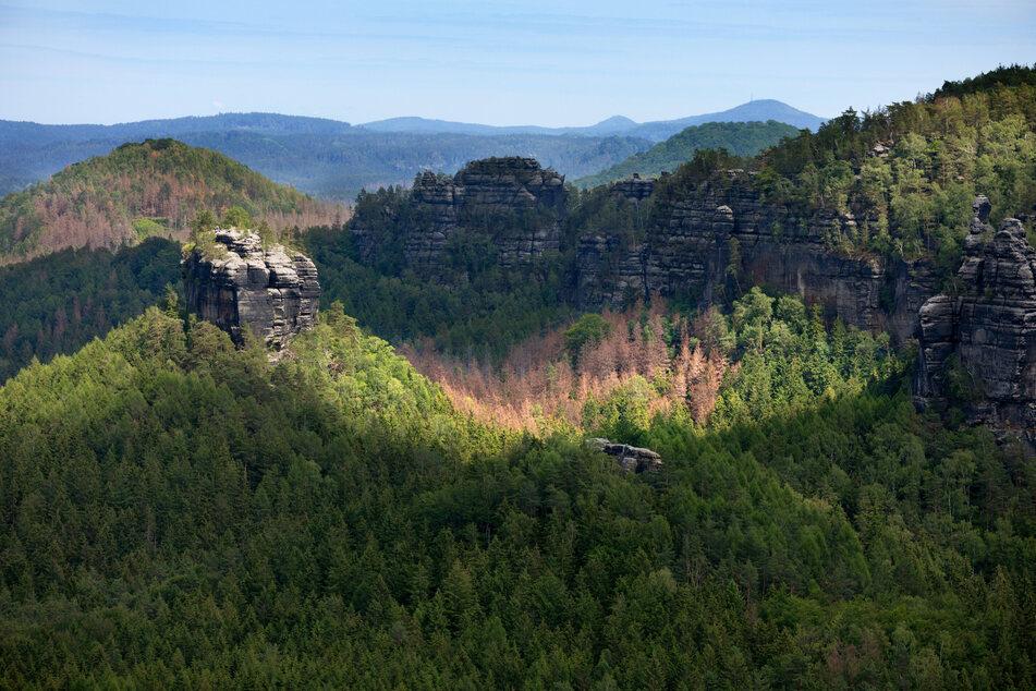 Eingeschränkter Blick: Die kahlen Stellen im Waldbild sind zu erkennen. Aber nur aus dem Weltall ergibt sich ein vollständiges Bild.