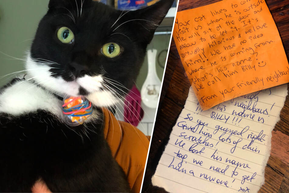 Please Mr. Post-cat: this feline turns neighbors into pen pals