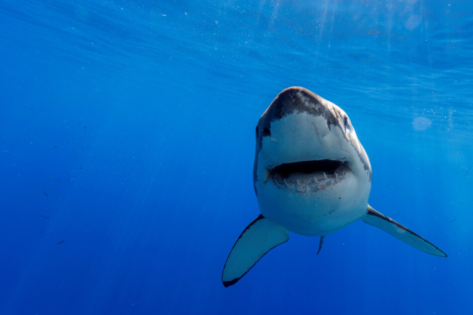 Jugendlicher (17) kommt beim Surfen durch Hai-Angriff ums Leben