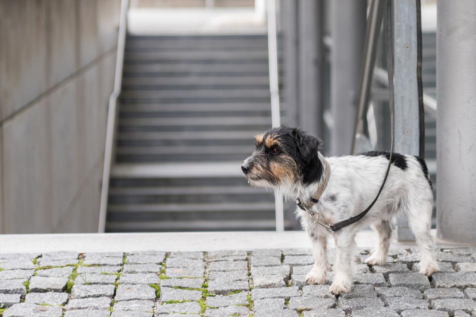 Chemnitz: Das droht Herrchen und Frauchen, wenn sie ihr Haustier aussetzen