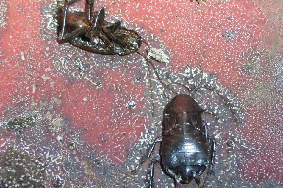 Ratten, Mäuse, Motten, Schaben und anderes Ungeziefer wurde von Beamten gefunden.
