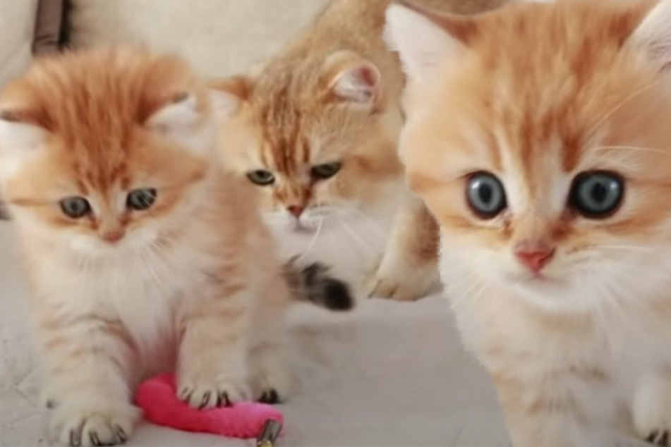 The cutest cat video ever? Pixel meets his dad