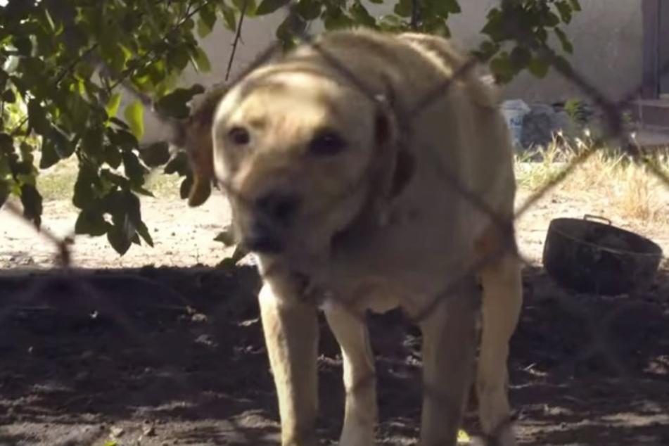 Der Labrador bellte, als seine Retter kamen.
