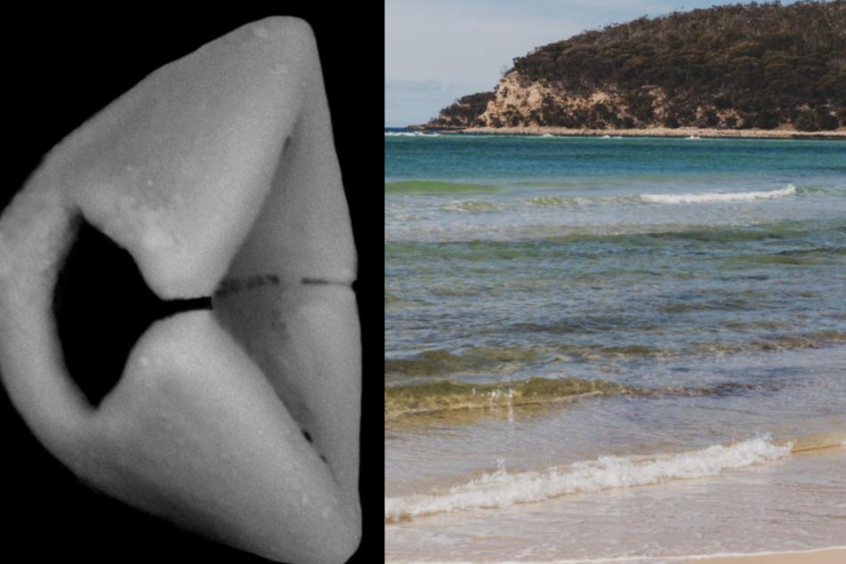 Meeresforscher machen vor Ostküste Australiens beeindruckenden Fund