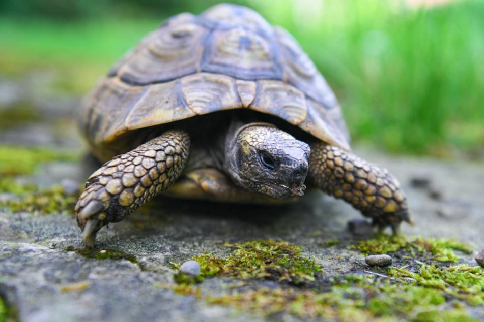 Schildkröte macht Wochenendausflug im Allgäu
