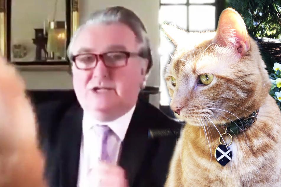Katze crasht in virtuelle Parlamentssitzung und wird zum Internet-Hit