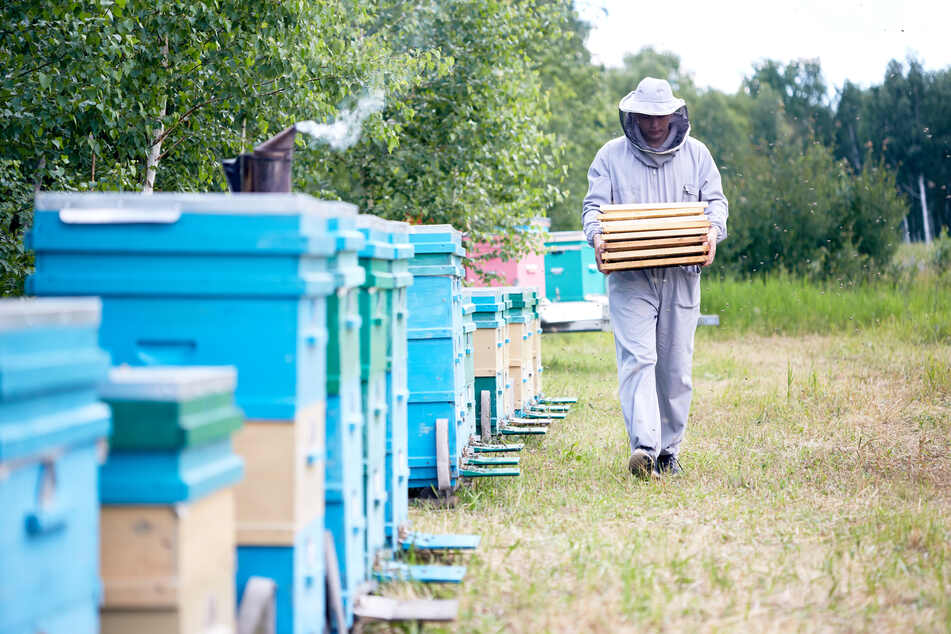 Gemeine Brandstiftung? Tausende Bienen sterben grausam in Flammen