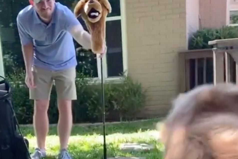 Mit einer Hundepuppe hat sein Besitzer Cooper einen ganz schönen Schrecken eingejagt,