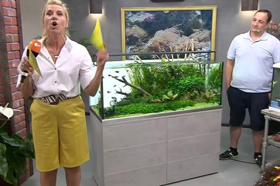 """Im Laufe des aktuellen ZDF-Fernsehgartens ging es bei """"Kiwi"""" unter anderem auch um die korrekte Aquarium-Pflege."""