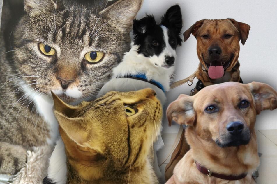 5 besondere Hunde und Katzen: Diese Haustiere suchen dringend ein Zuhause