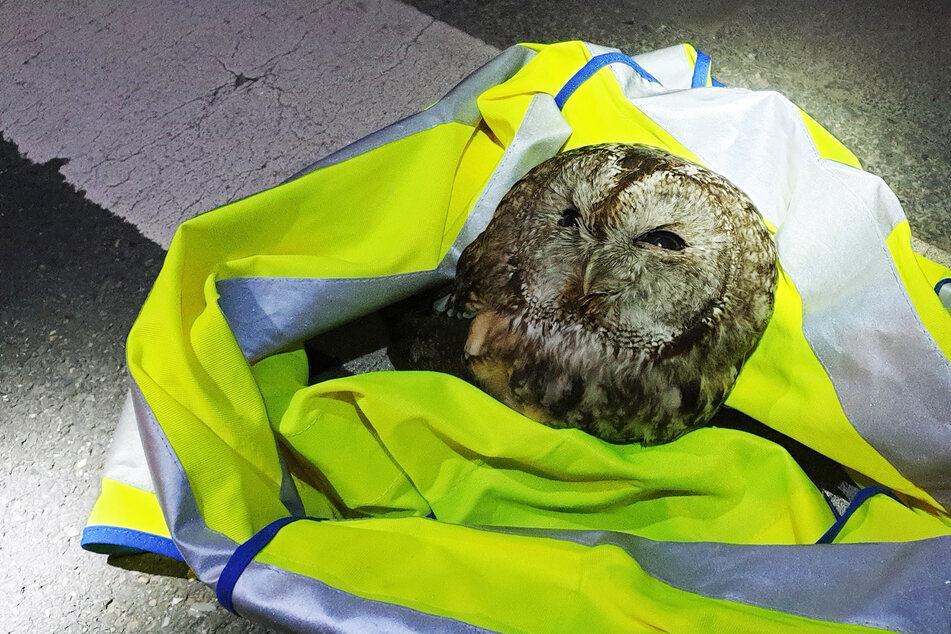 In einer Jacke wurde das Tier aufgegriffen und in einer Plastik-Kiste zu einem Experten transportiert.