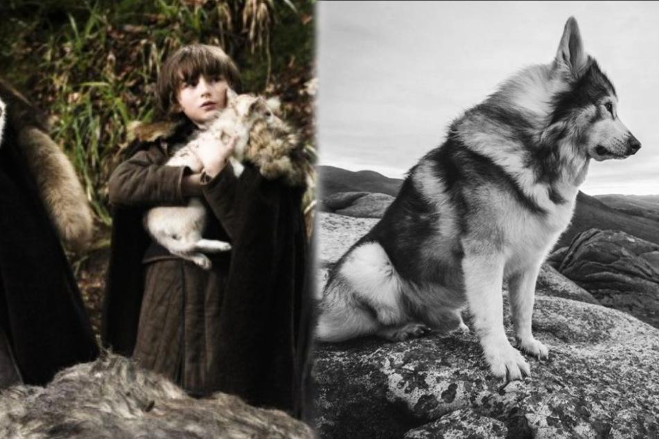 """Tiefe Trauer! Schattenwolf aus """"Game of Thrones"""" nach Kampf gegen Krebs gestorben"""